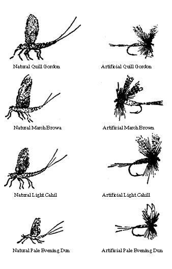 Calendar of insect hatches